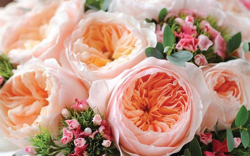 Ảnh hoa hồng Juliet
