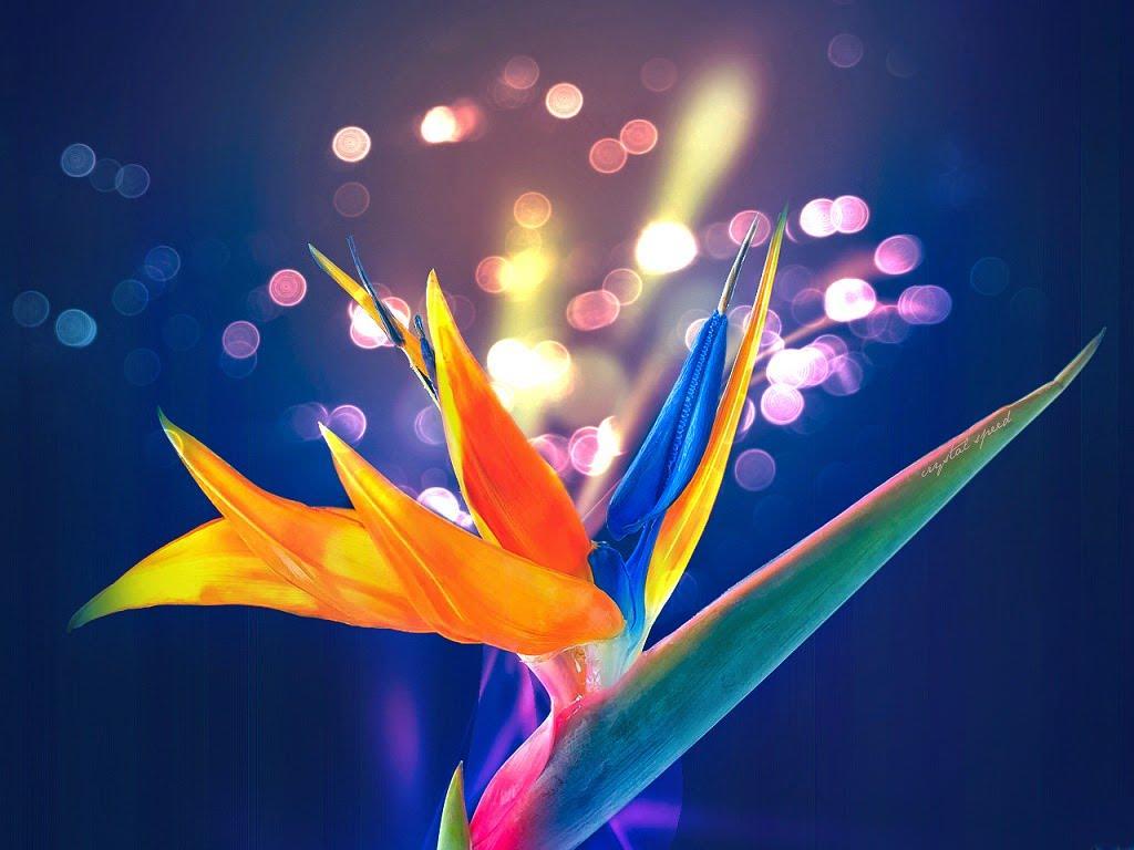 Ảnh hoa thiên điểu tuyệt đẹp