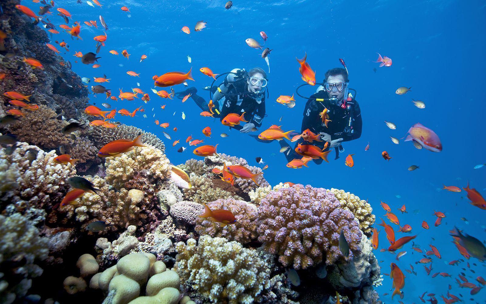 Ảnh lặn biển ngắm san hô ở Phú Quốc