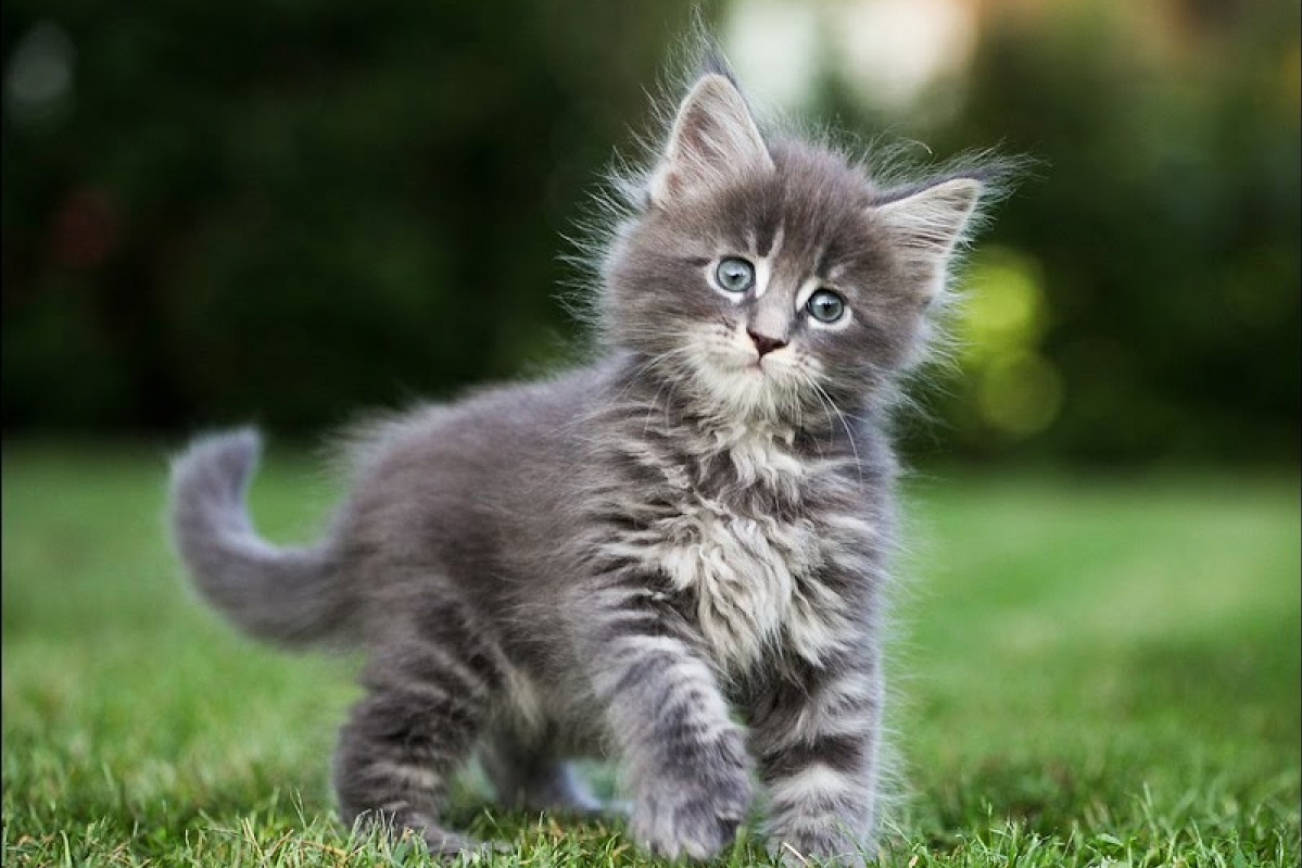 Ảnh mèo ald siêu đáng yêu