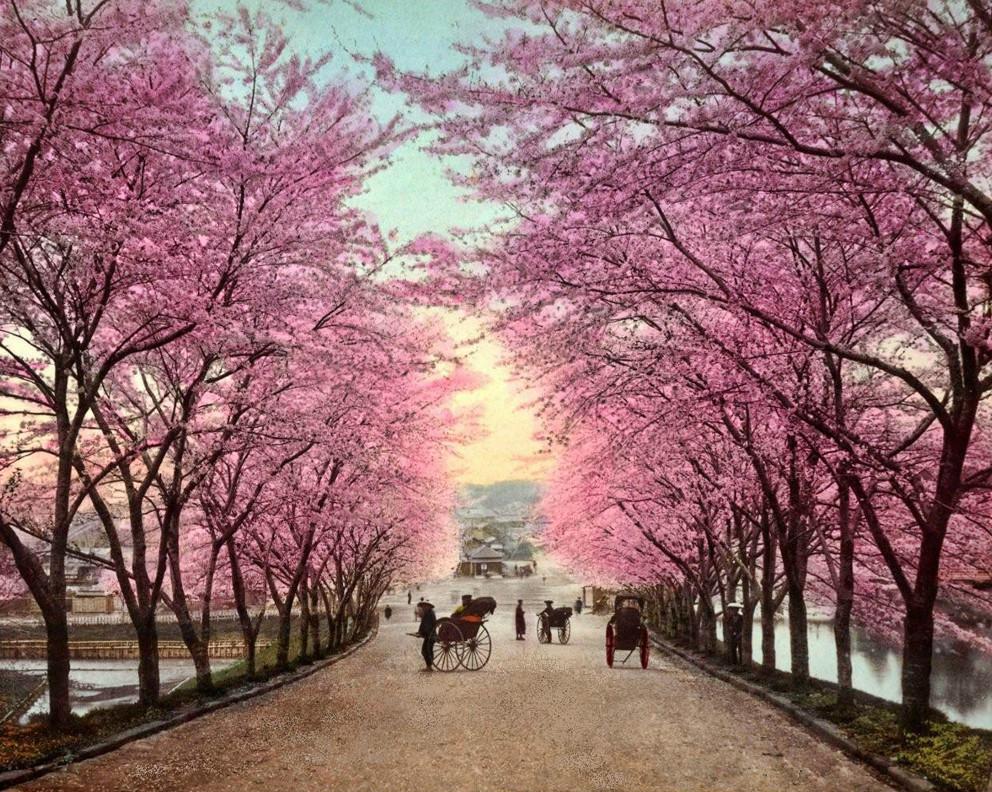 Ảnh Nhật Bản mùa hoa anh đào