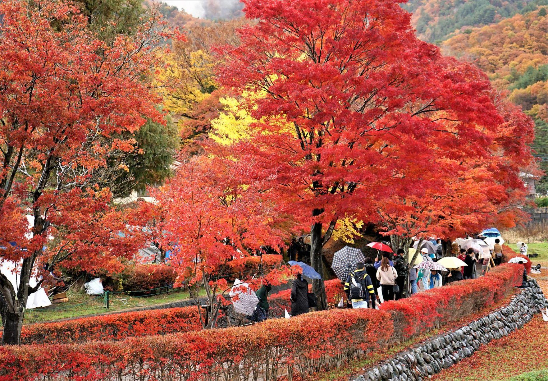 Ảnh Nhật Bản mùa lá đỏ
