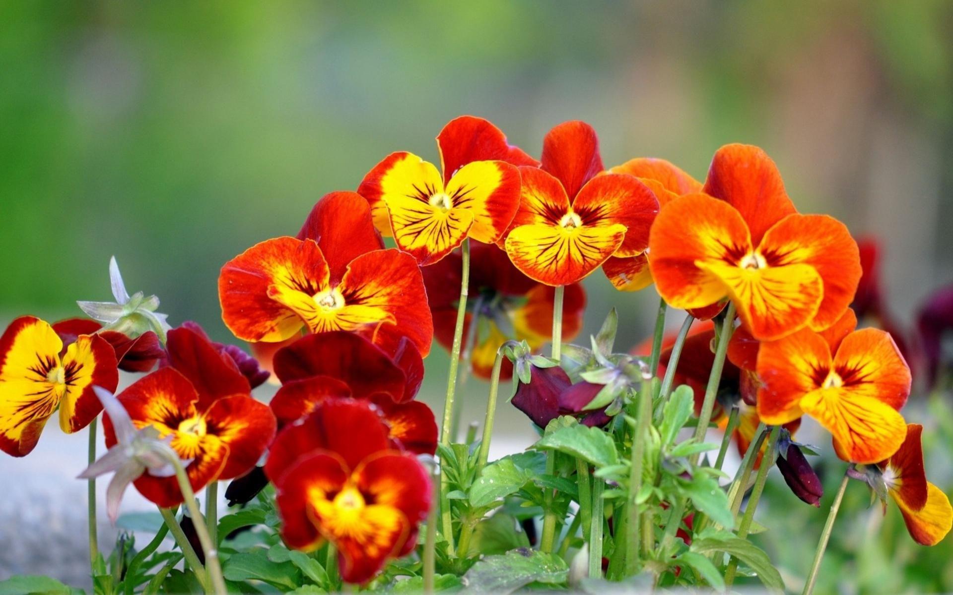 Hình ảnh loài hoa đẹp rực rỡ sắc màu
