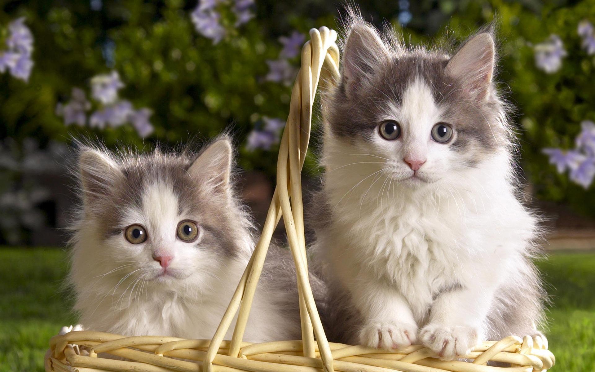 Hình ảnh mèo ald dễ thương, đẹp nhất