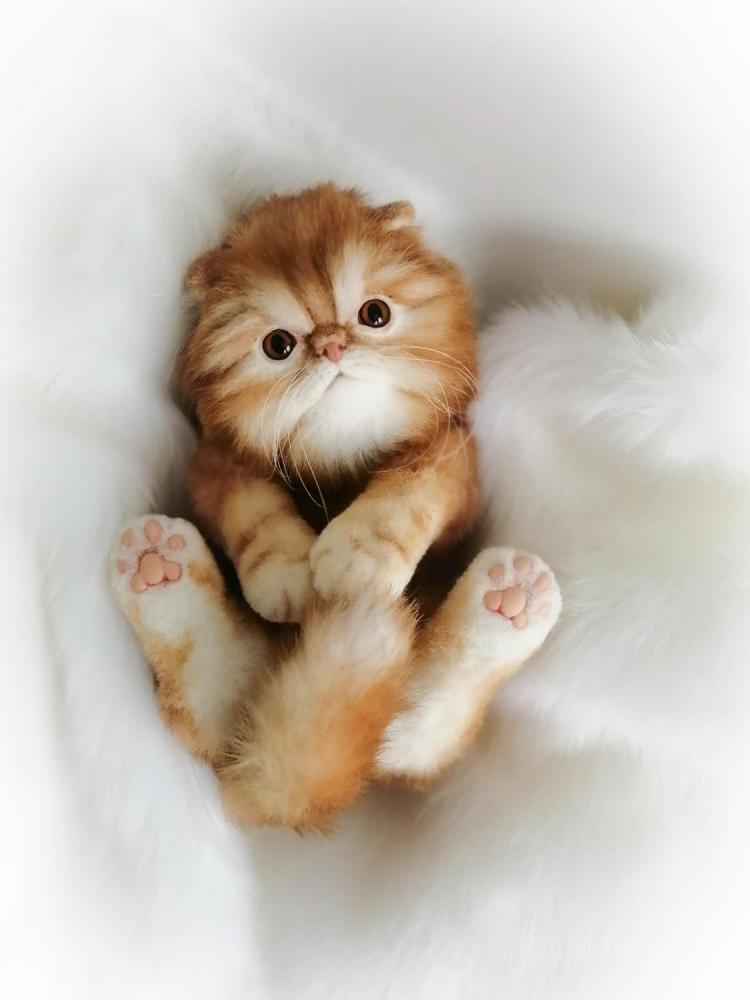 Hình mèo Ba Tư ngộ nghĩnh đáng yêu