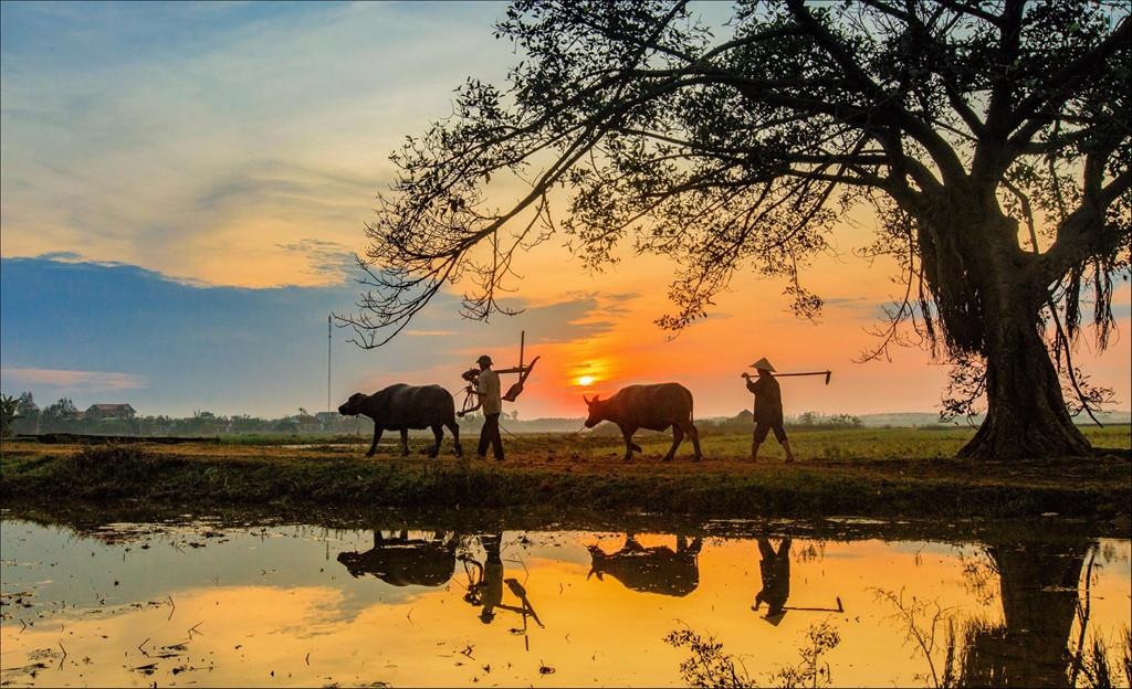 Hình ảnh đi làm về ở làng quê Việt Nam