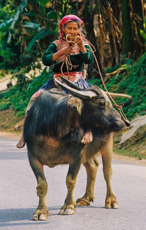 Hình ảnh người phụ nữ Hmong cưỡi trâu