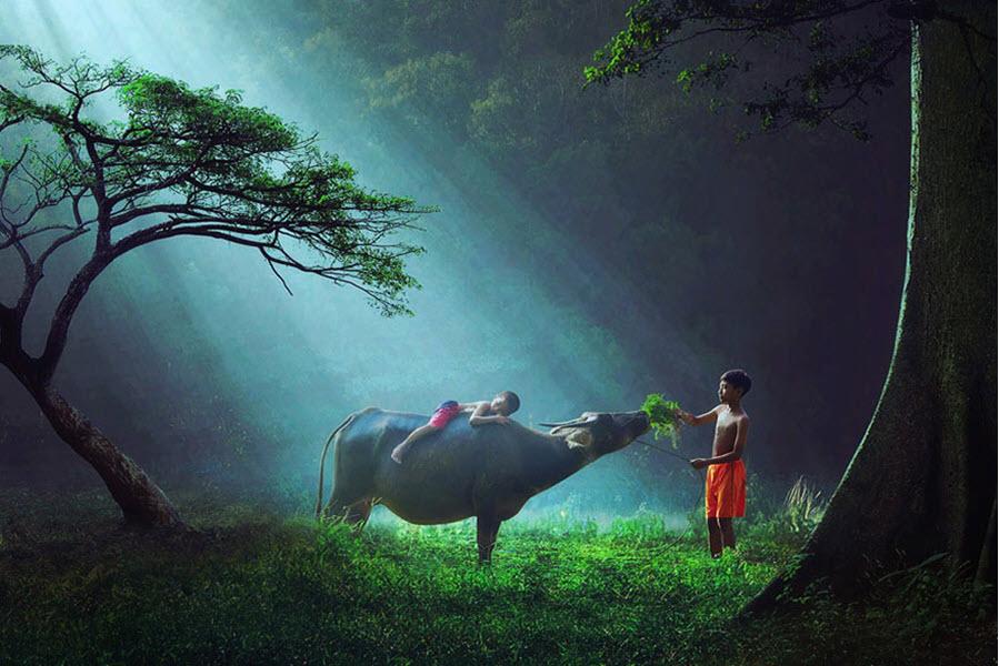 Hình ảnh trẻ em chăn trâu ở các nước