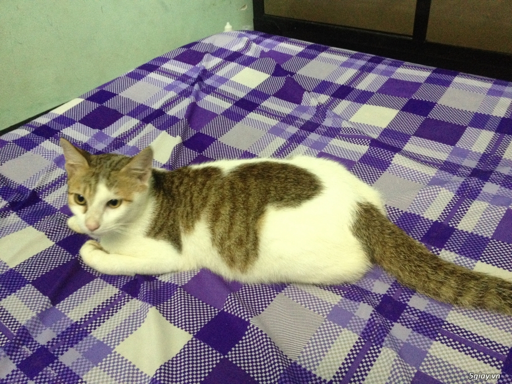 Hình ảnh mèo tam thể đực đẹp và cute