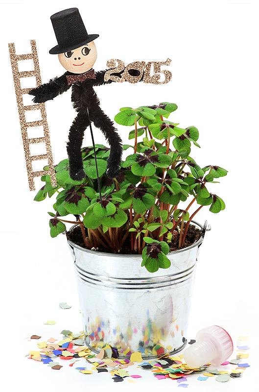 Hình ảnh chậu cây 4 lá độc đáo, sáng tạo