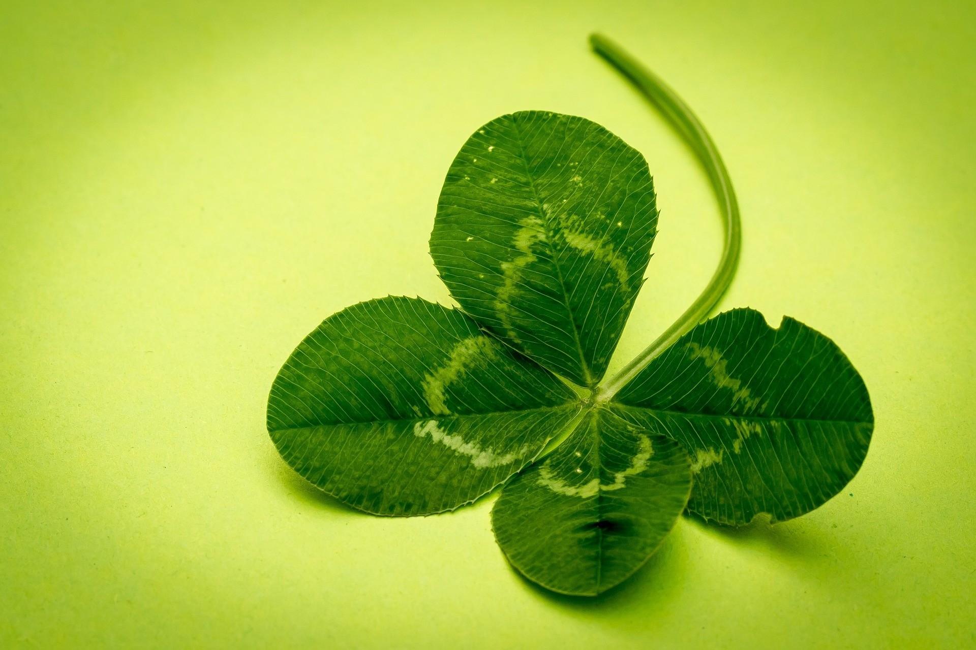 Hình ảnh cỏ 4 lá mang lại niềm tin, hy vọng