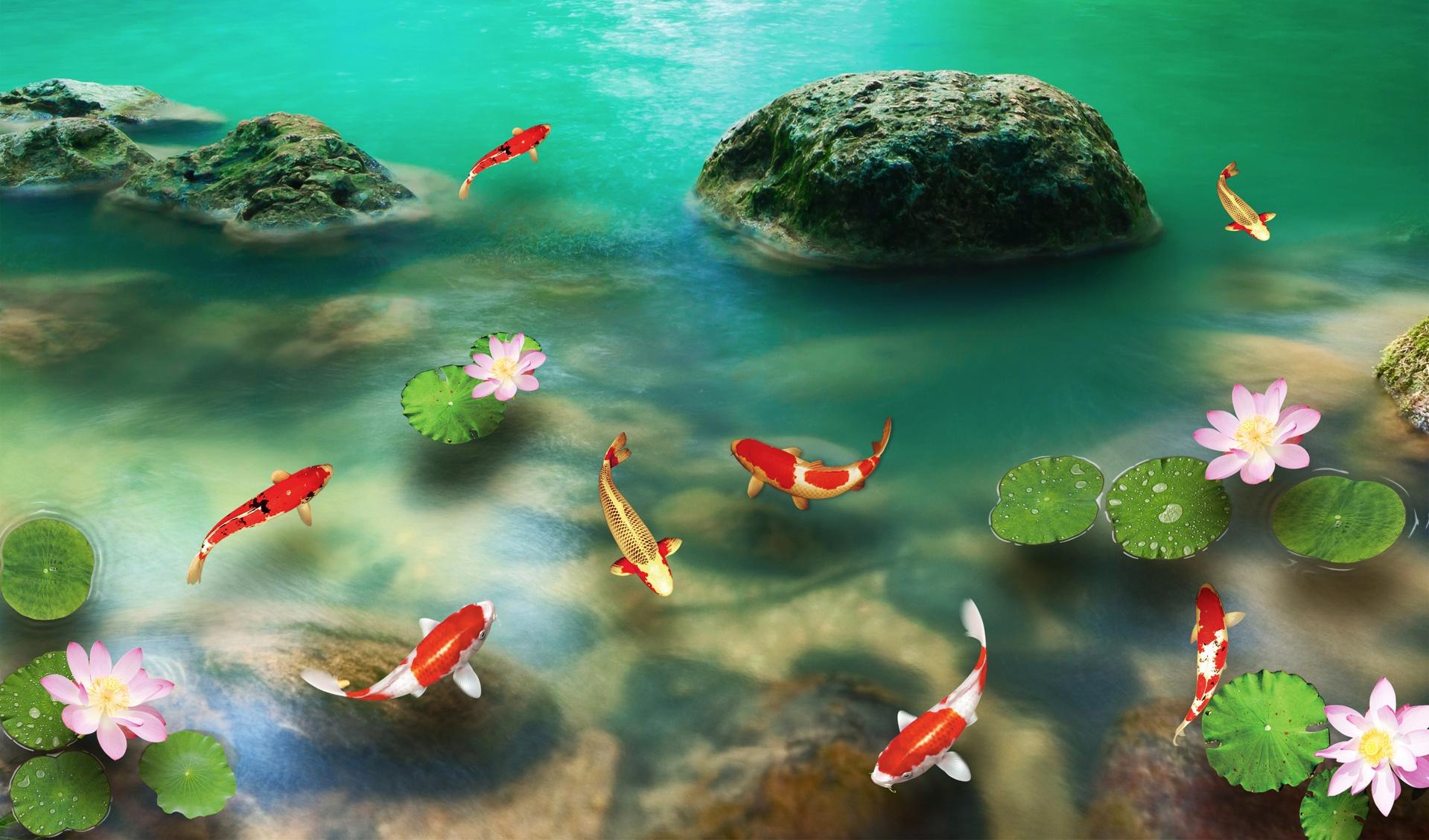 Hình nền cá chép đẹp
