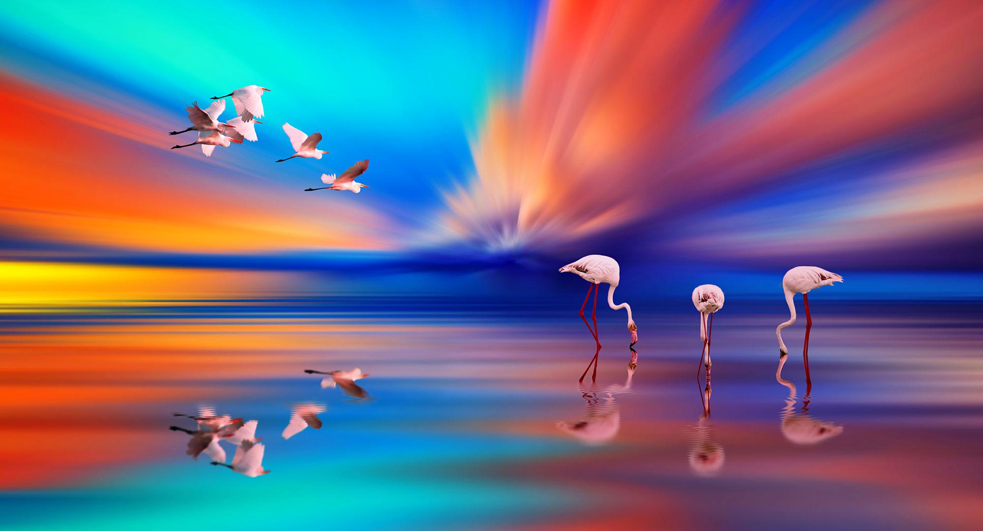 Hình nền các loài chim đẹp nhất