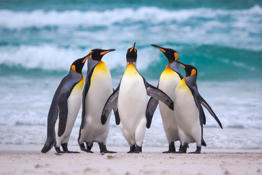 Hình nền chim cánh cụt đẹp