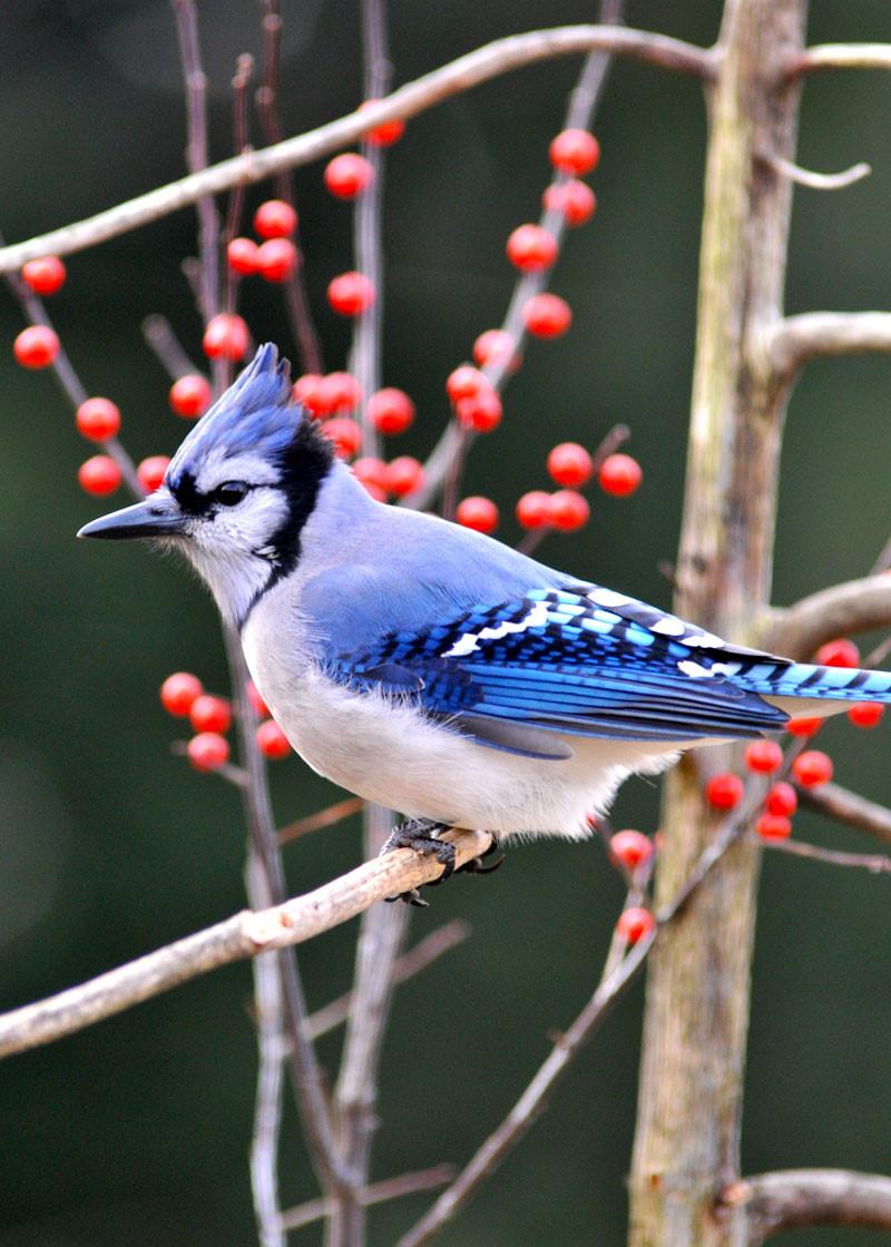 Hình nền chim cho điện thoại đẹp