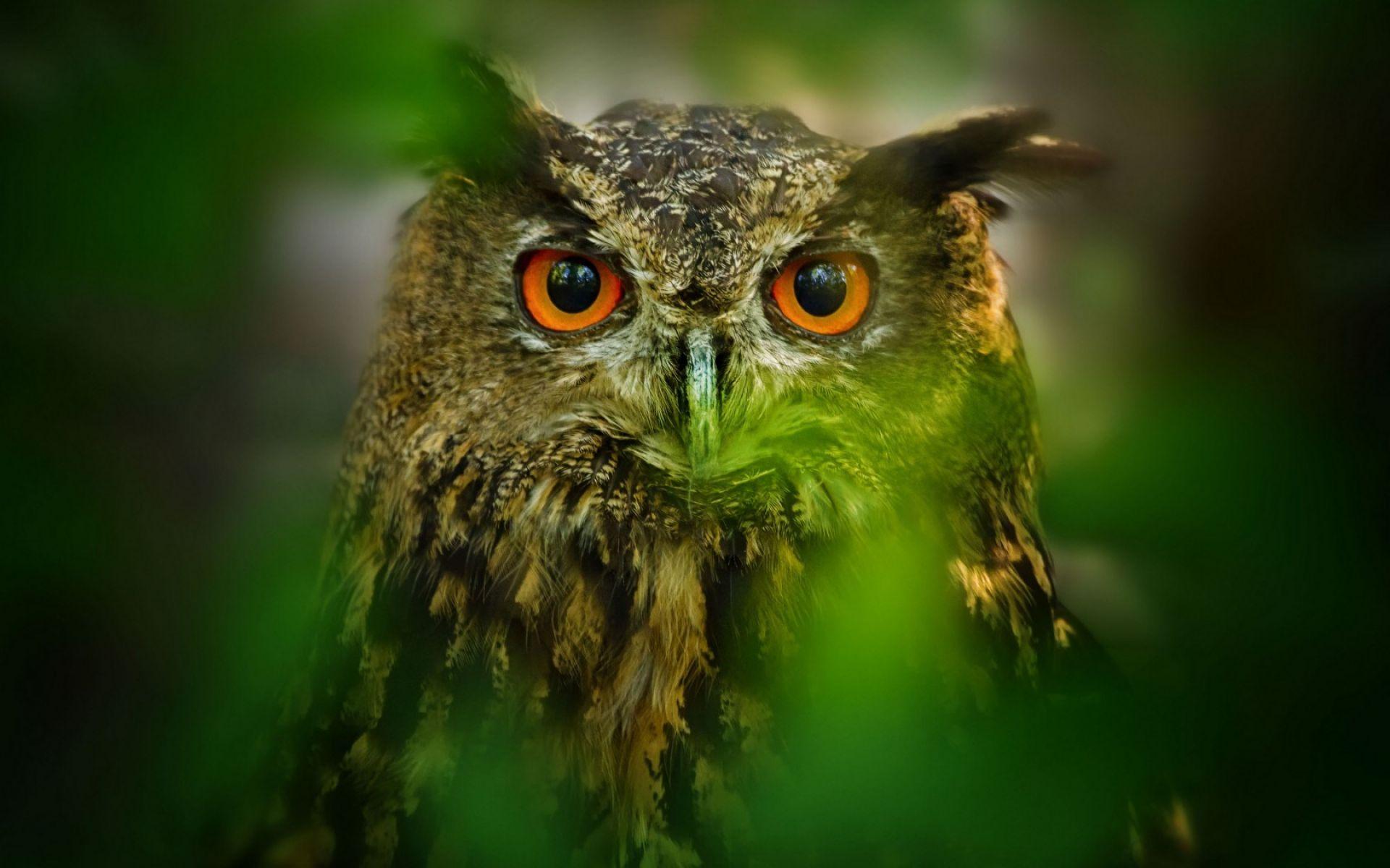 Hình nền chim cú và thiên nhiên
