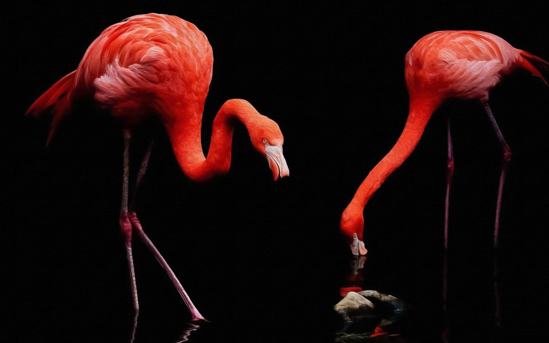 Hình nền chim hồng hạc đẹp