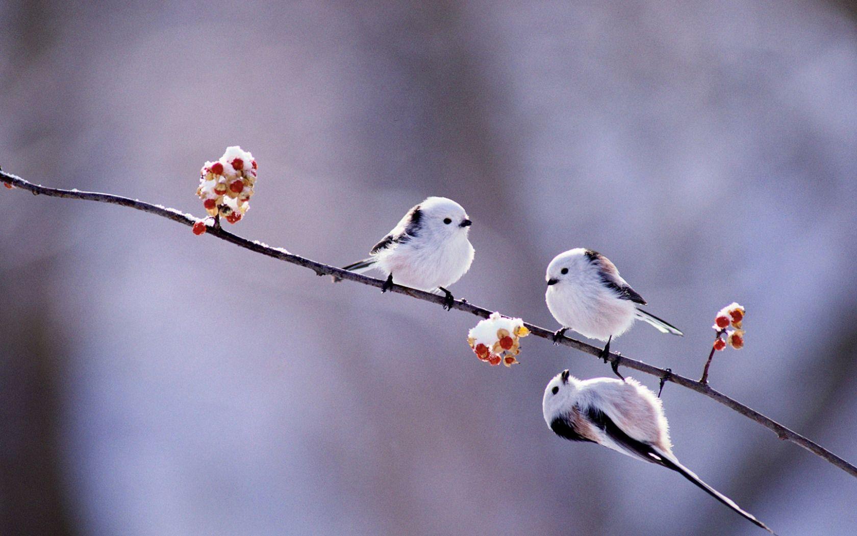 Hình nền chim non đáng yêu