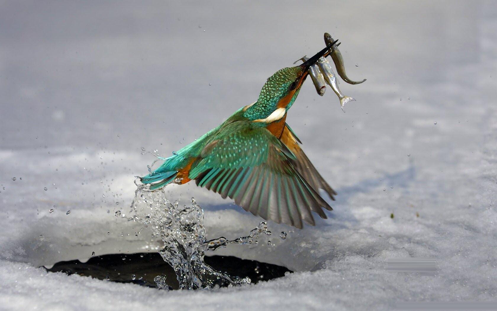 Hình nền chim săn mồi cho máy tính cực đẹp