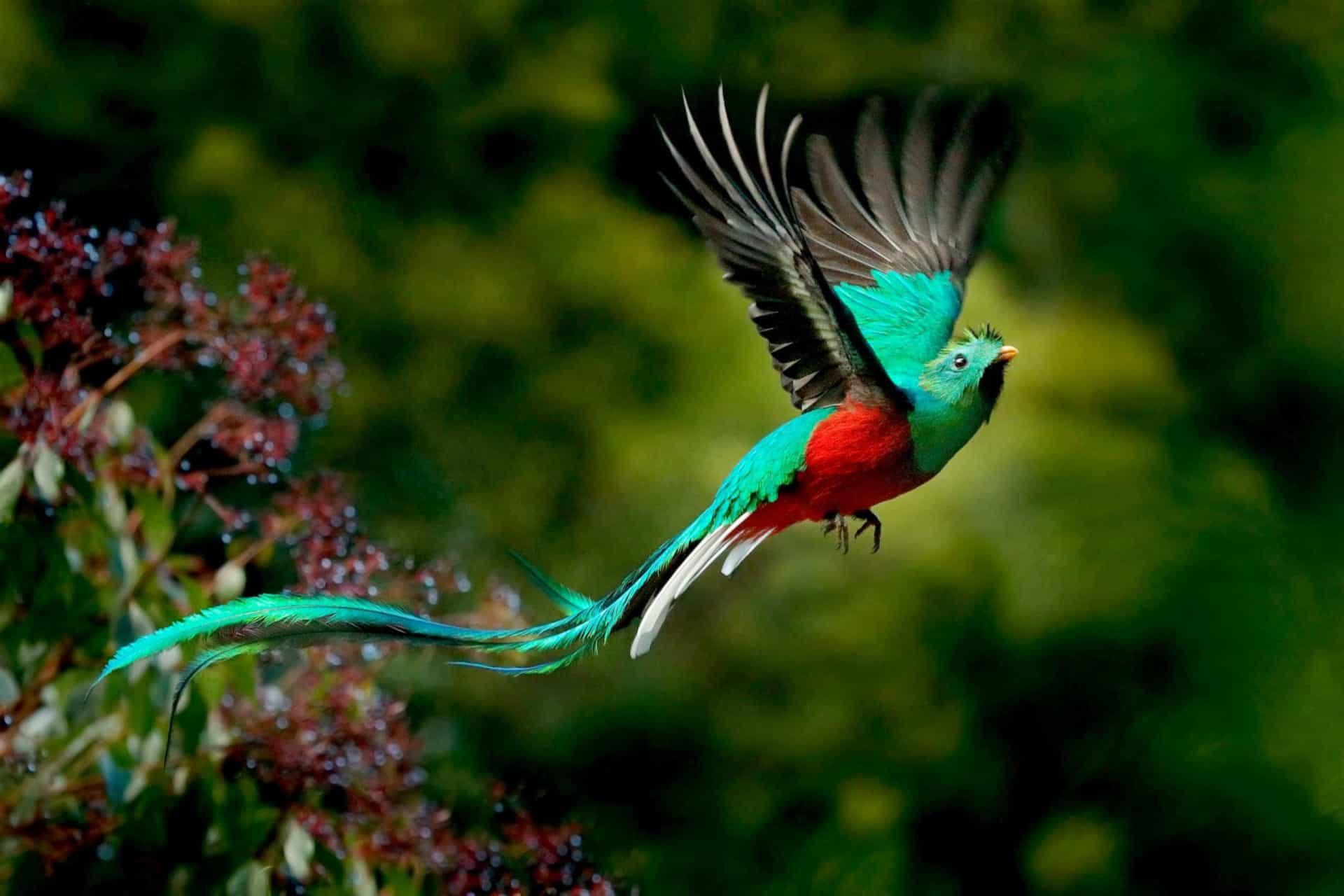 Hình nền chú chim có bộ lông đẹp