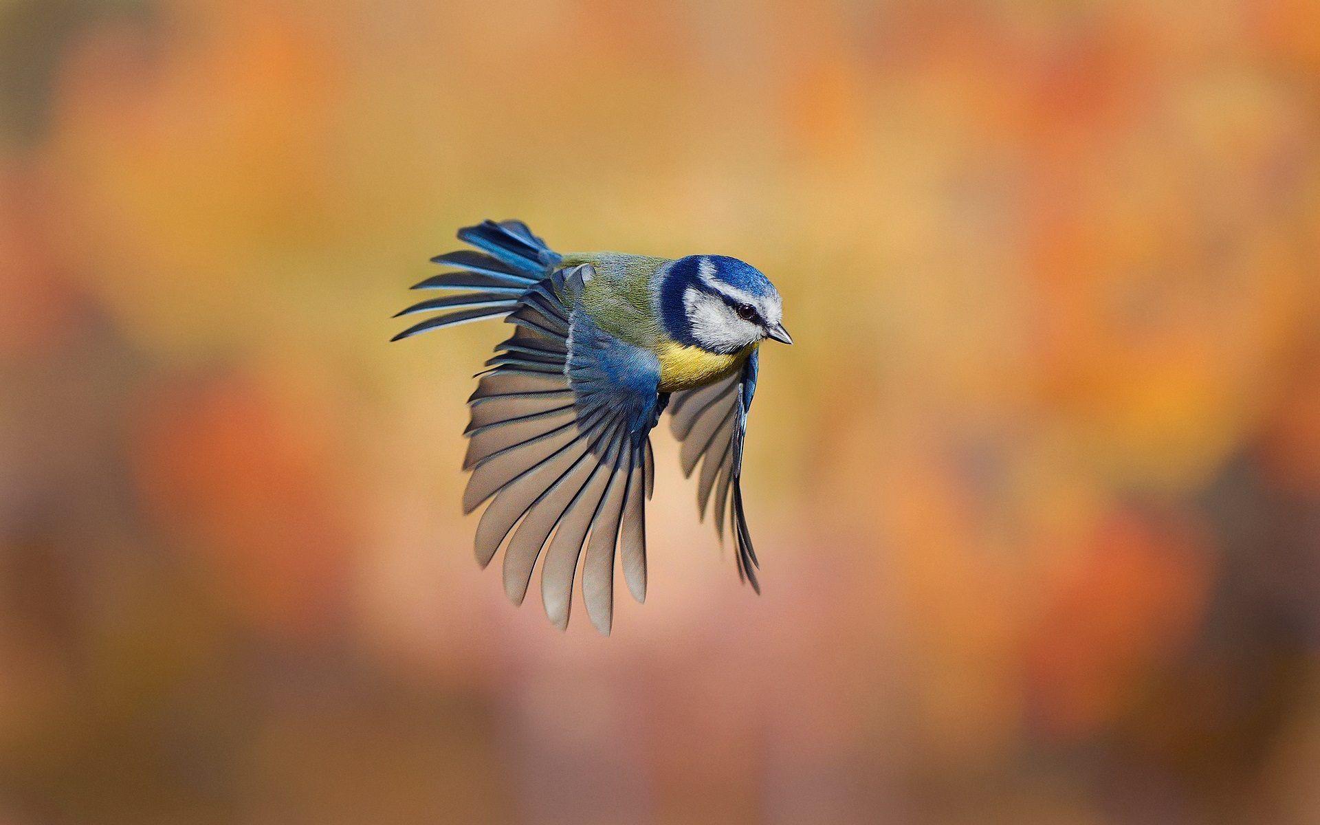 Hình nền chú chim non đang bay