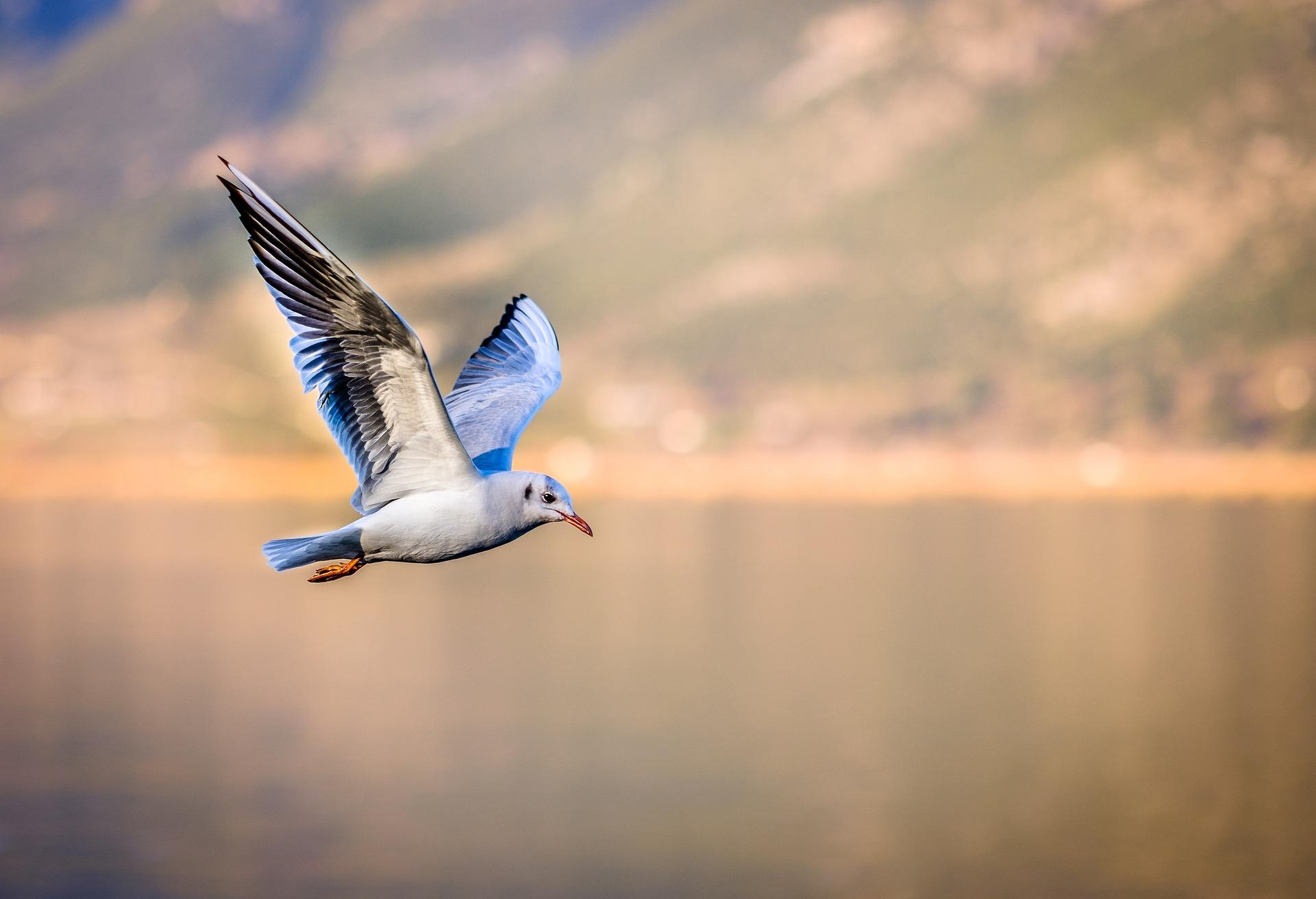 Hình nền con chim đang bay