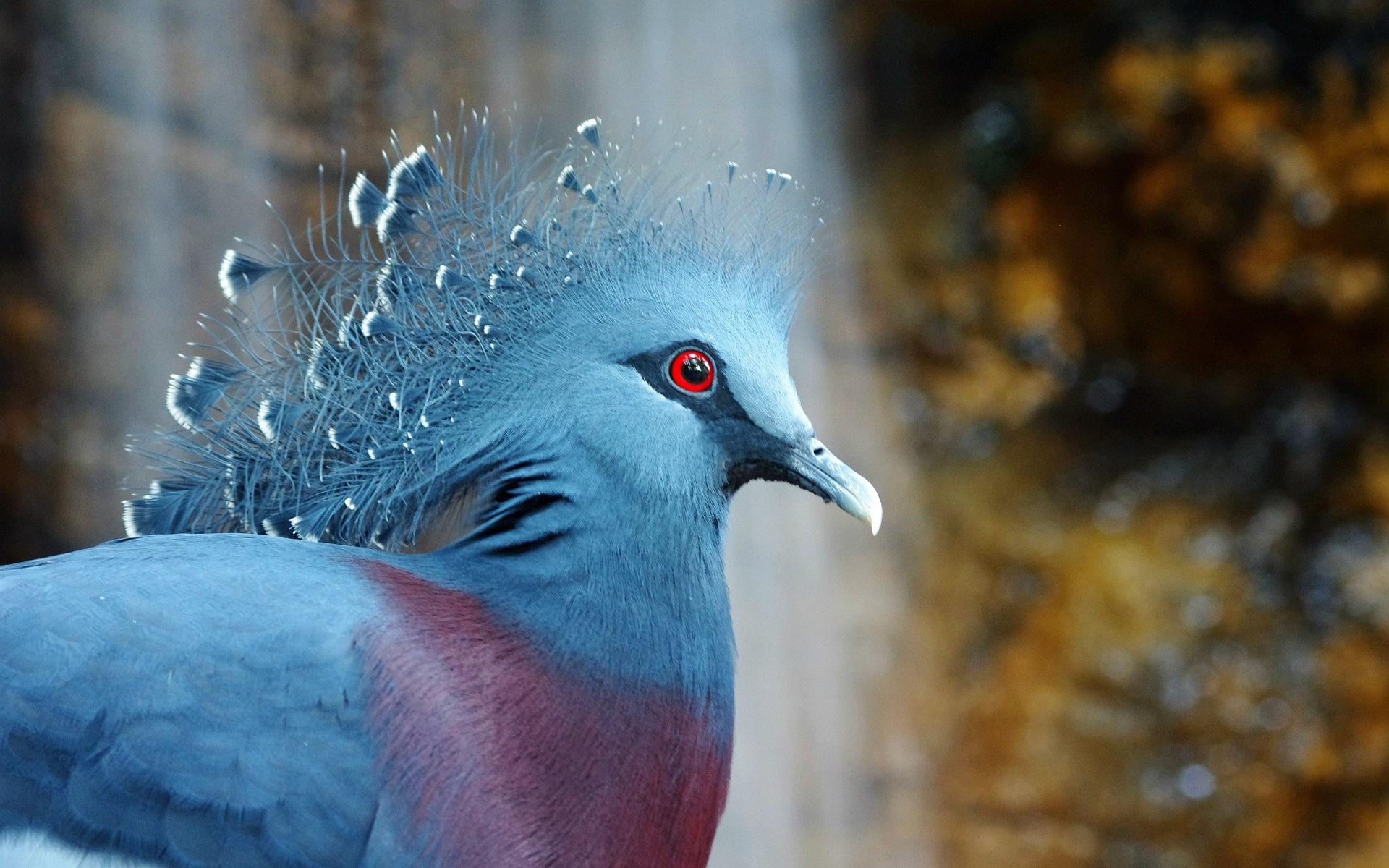 Hình nền con chim đẹp, chất lượng cao