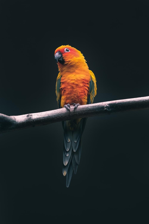 Hình nền con chim đẹp cho điện thoại