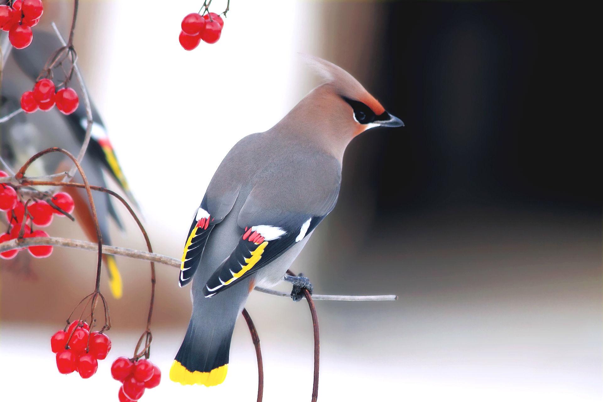 Hình nền con chim đẹp nhìn là mê