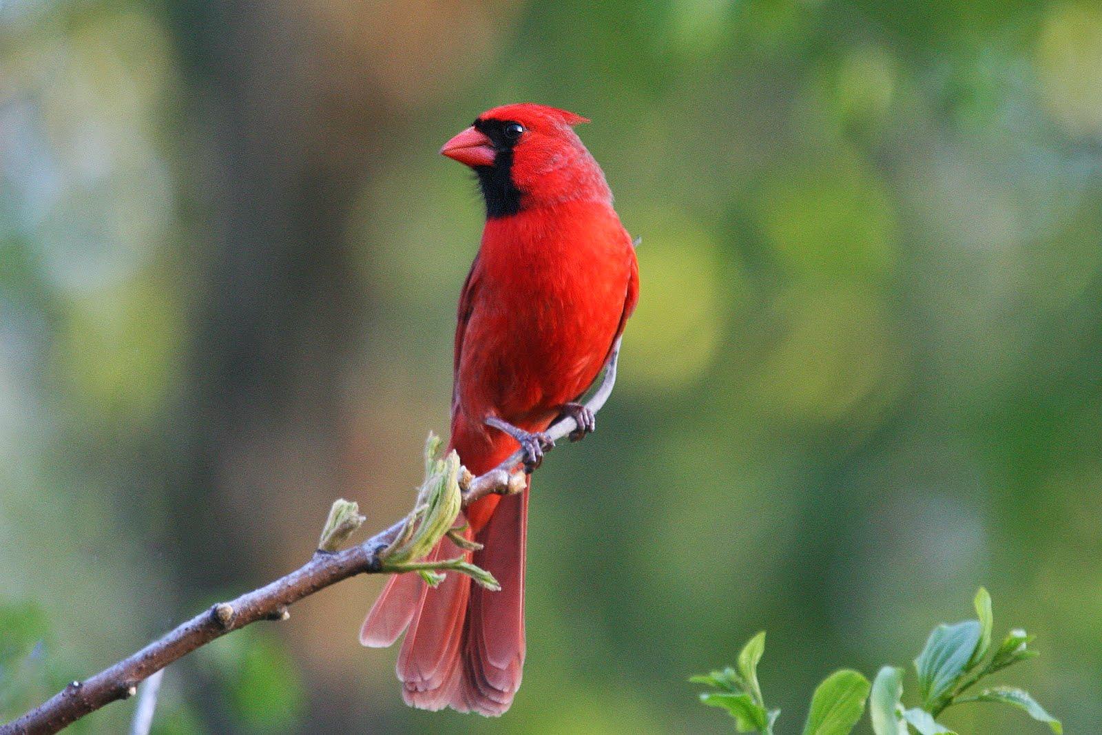 Hình nền con chim đẹp, sang chảnh