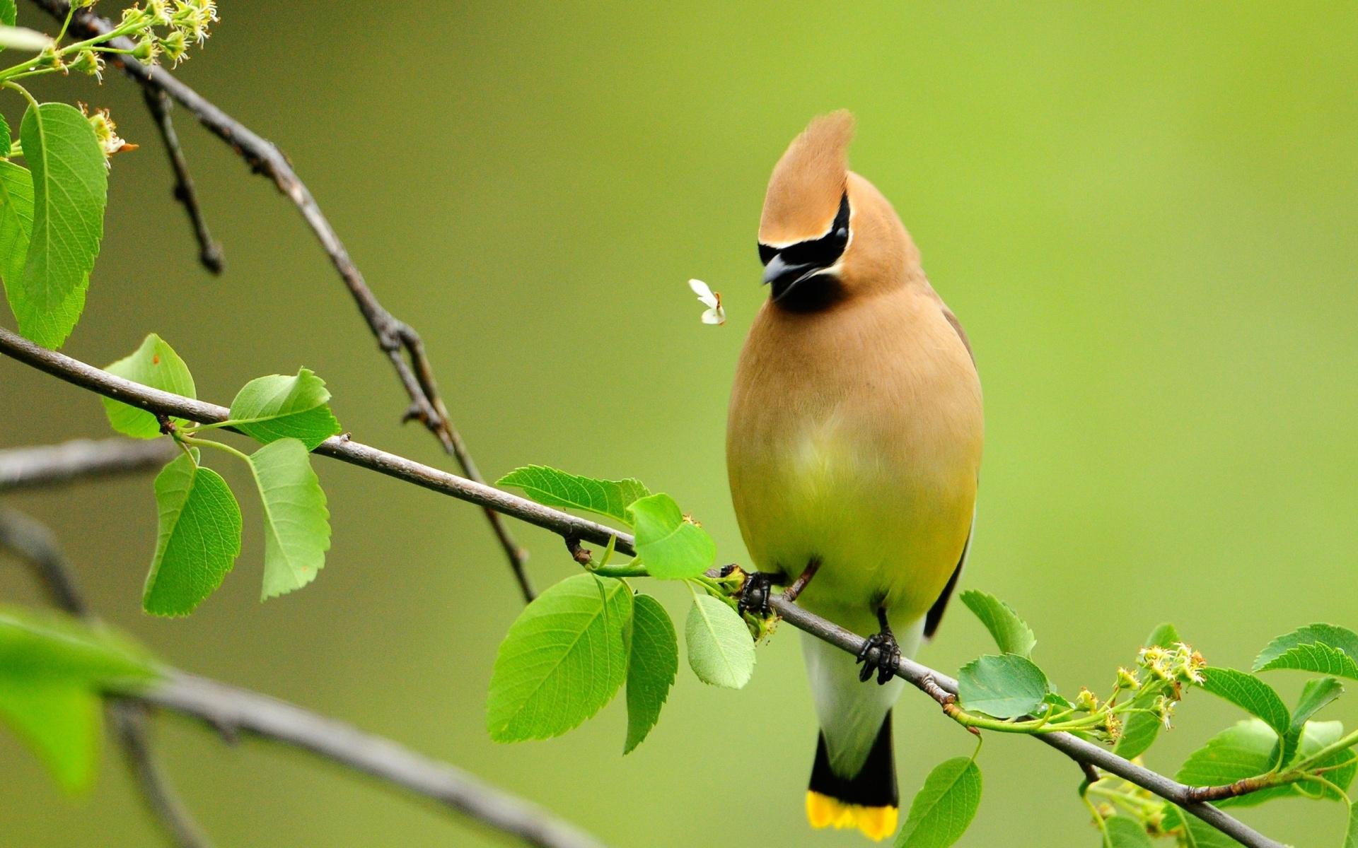 Hình nền con chim đẹp