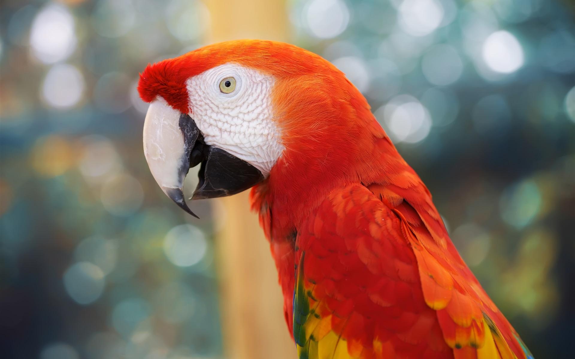 Hình nền con vẹt đa sắc màu