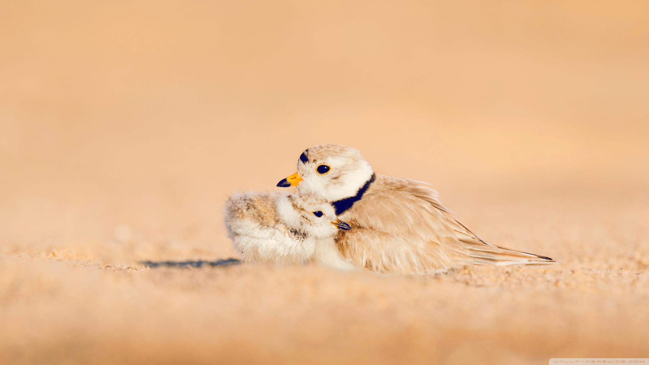 Hình nền những con chim đẹp, ý nghĩa