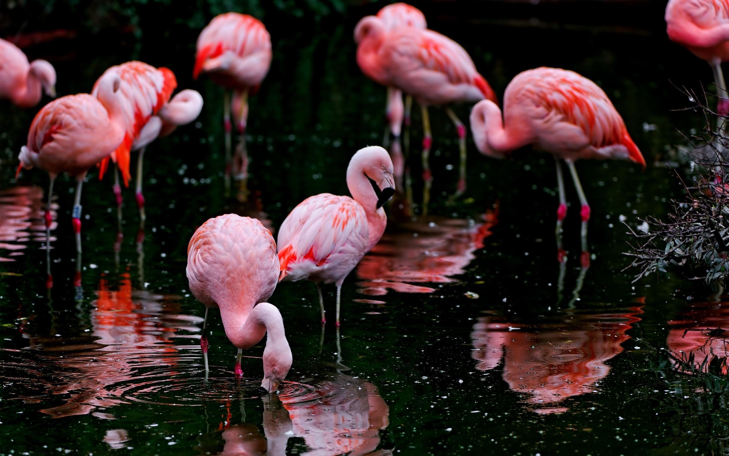 Hình nền những con chim hồng hạc đẹp nhất