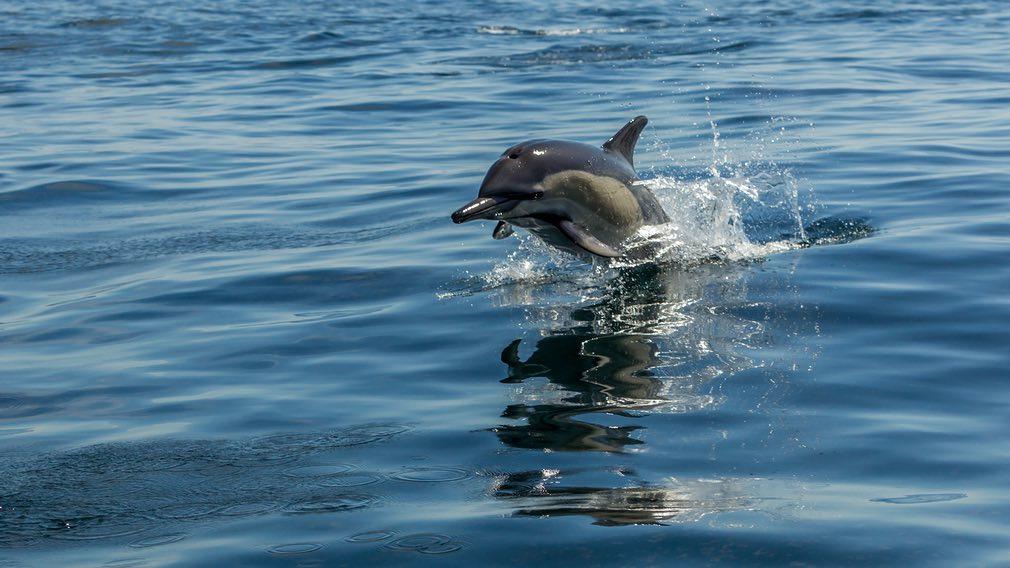 Ảnh cá heo đang bơi