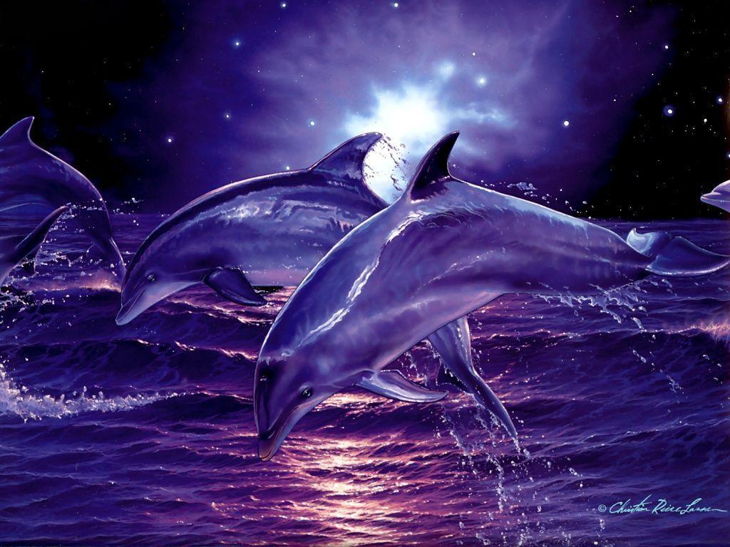 Hinh ảnh cá heo 3D cực đẹp