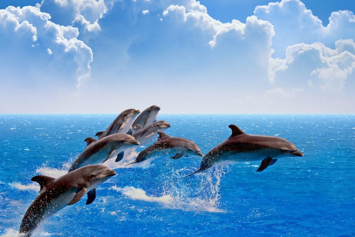 Hình ảnh cá heo bơi lội đẹp