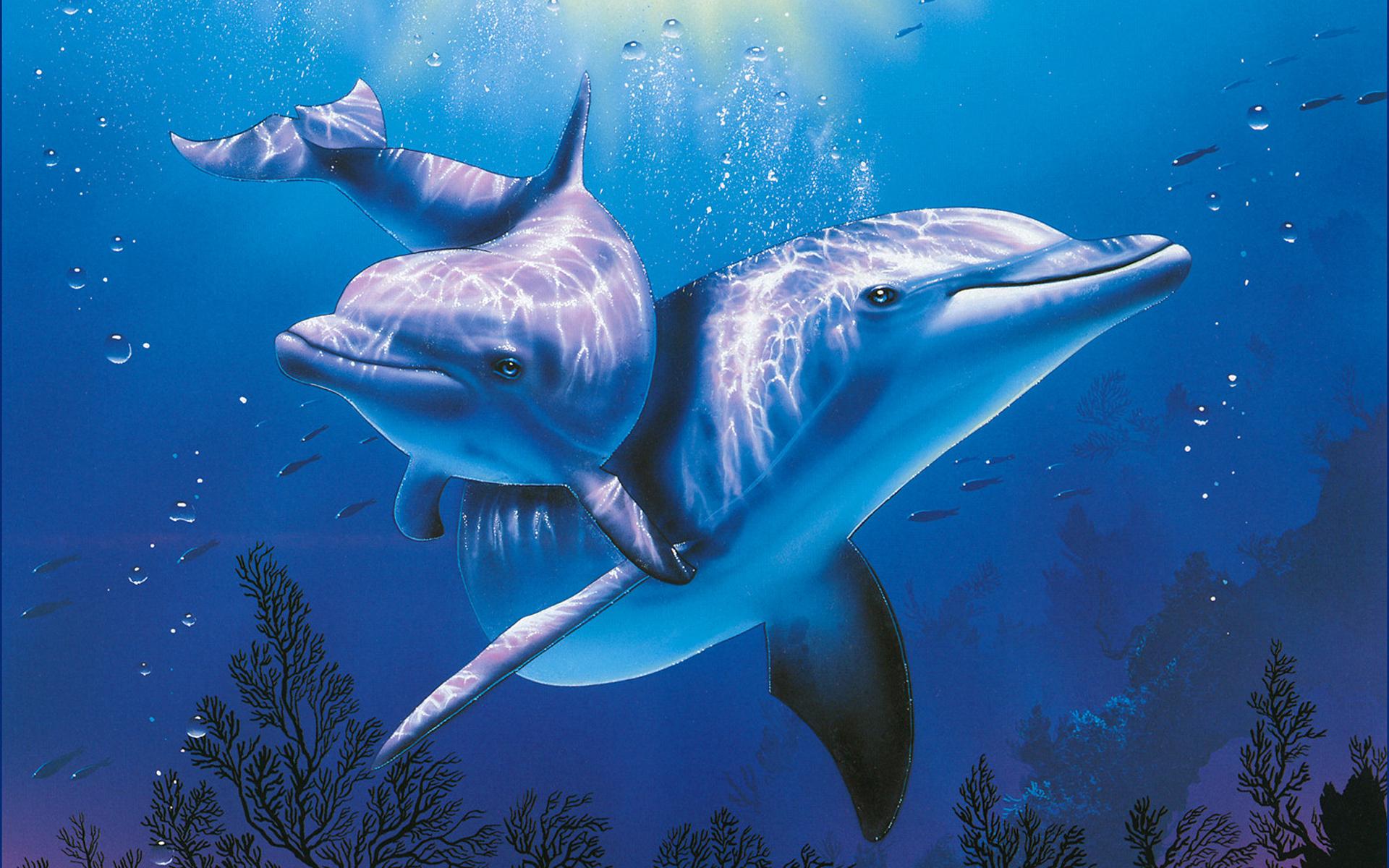 Hình ảnh cá heo đẹp, độc đáo