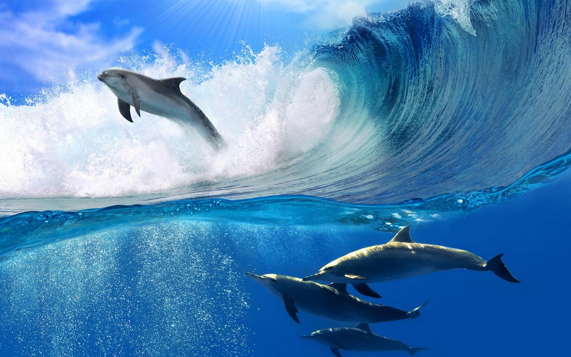 Hình ảnh cá heo đẹp và đáng yêu giữa đại dương xanh mát