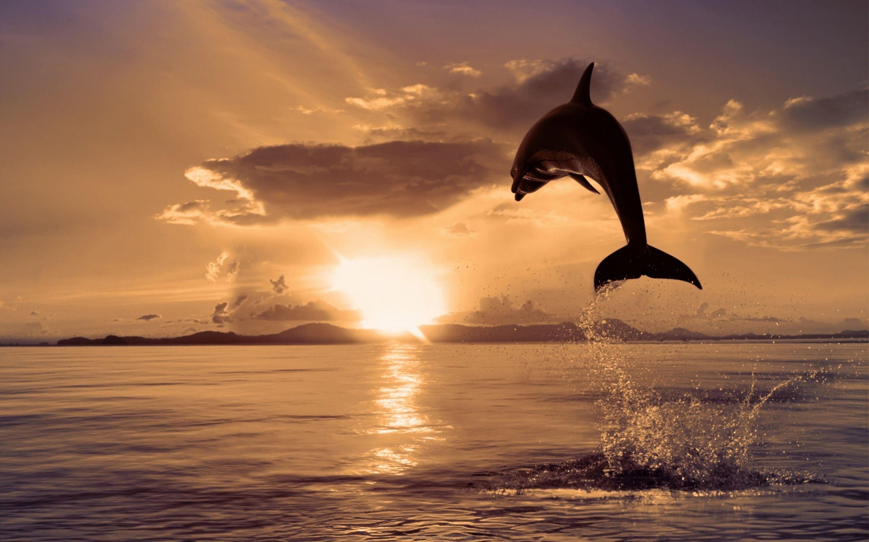 Hình ảnh cá heo dưới nắng hoàng hôn