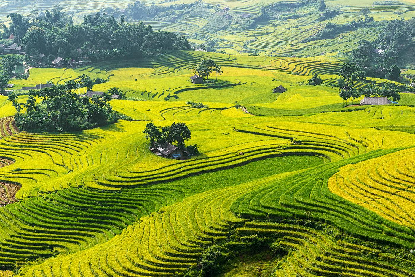 Hình ảnh cánh đồng lúa trên ruộng bậc thang