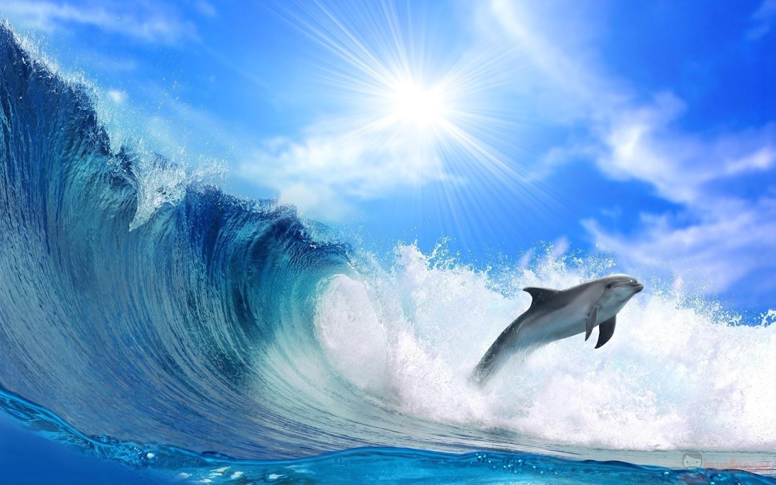 Hình ảnh đẹp về cá heo