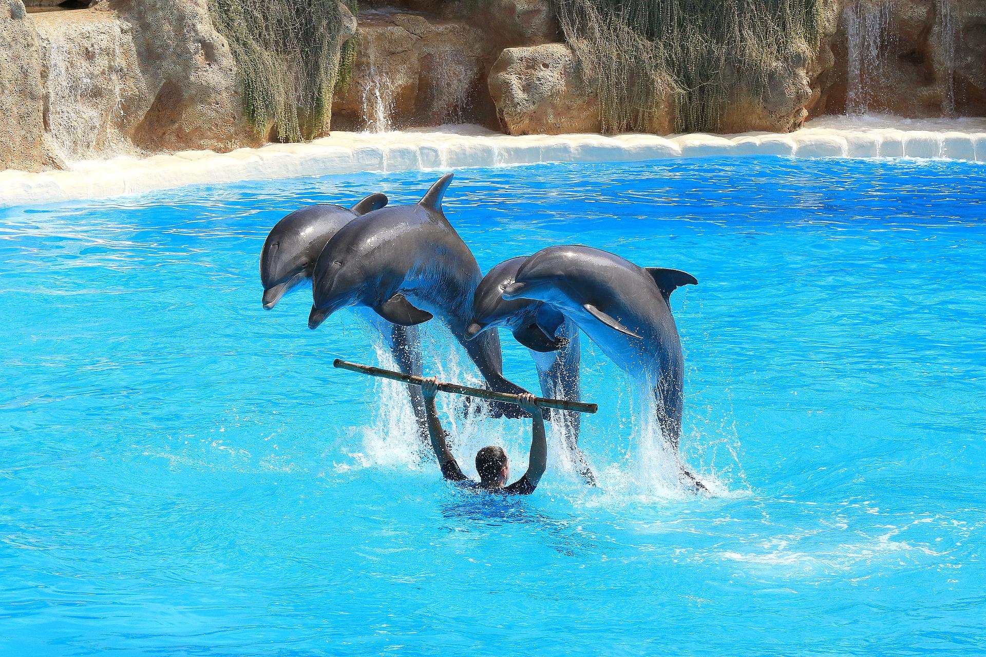 Hình ảnh huấn luyện cá heo