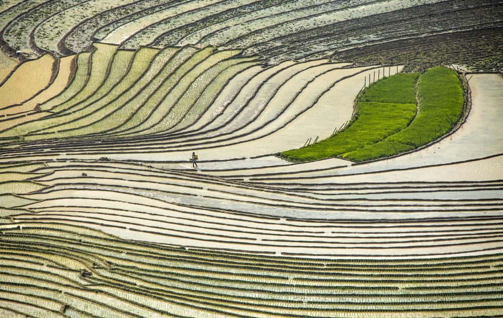 Hình ảnh mùa nước đổ trên những thửa ruộng bậc thang