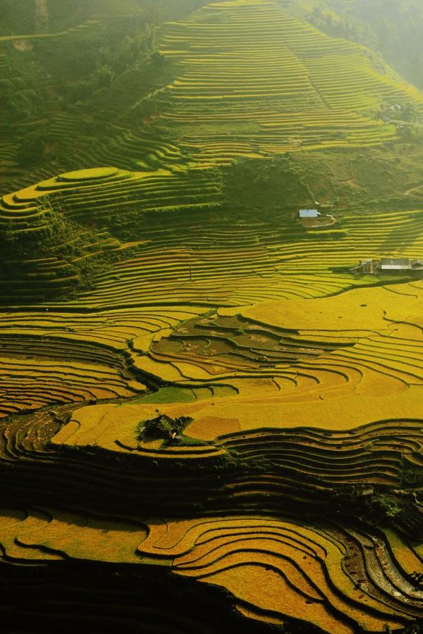 Hình ảnh ruộng bậc thang đẹp hấp dẫn nhất Việt Nam