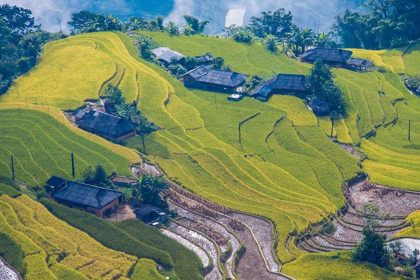 Hình ảnh ruộng bậc thang Hoàng Su Phì Hà Giang mùa lúa chín