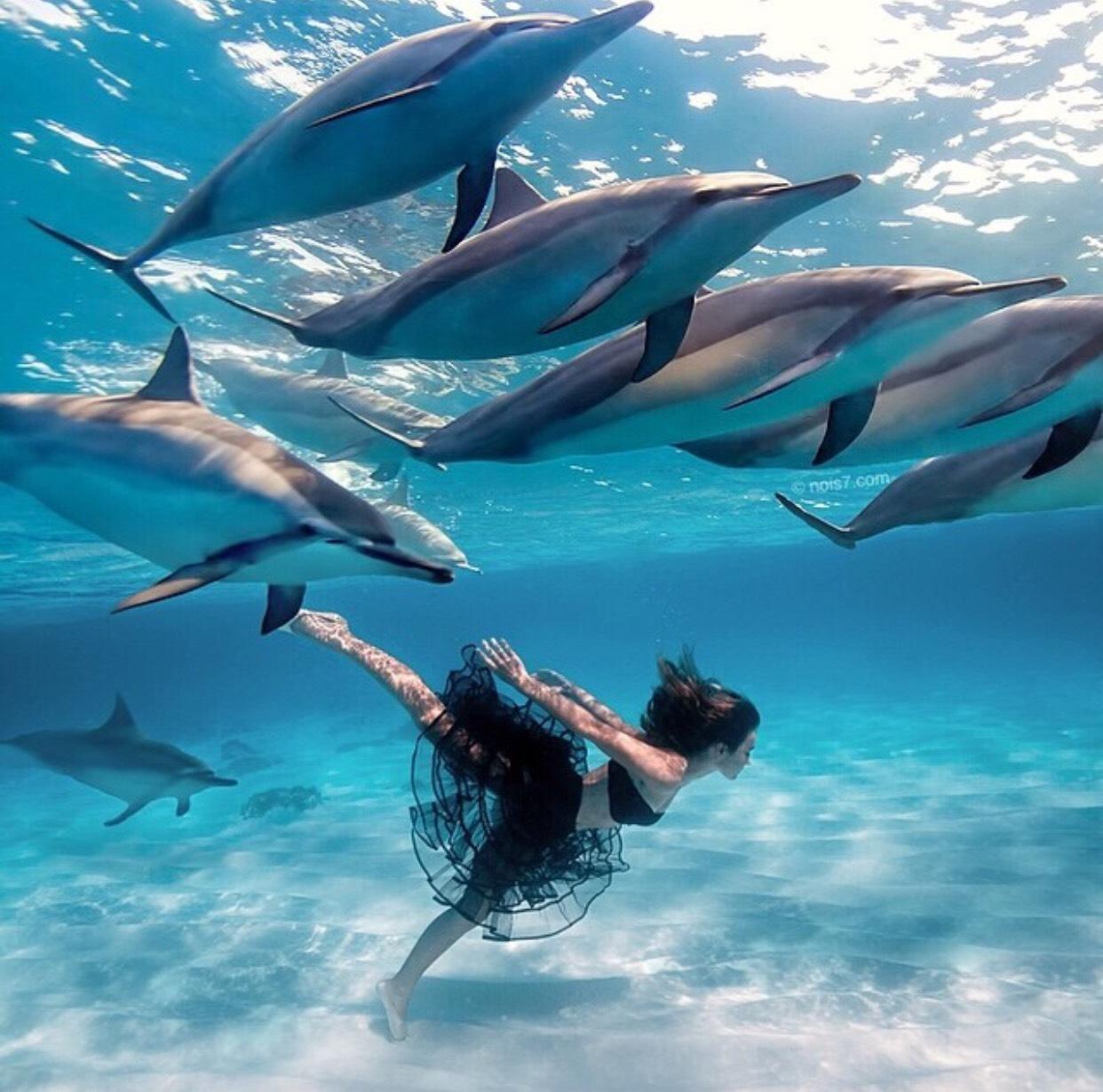Hình ảnh siêu thực về cá heo và con người