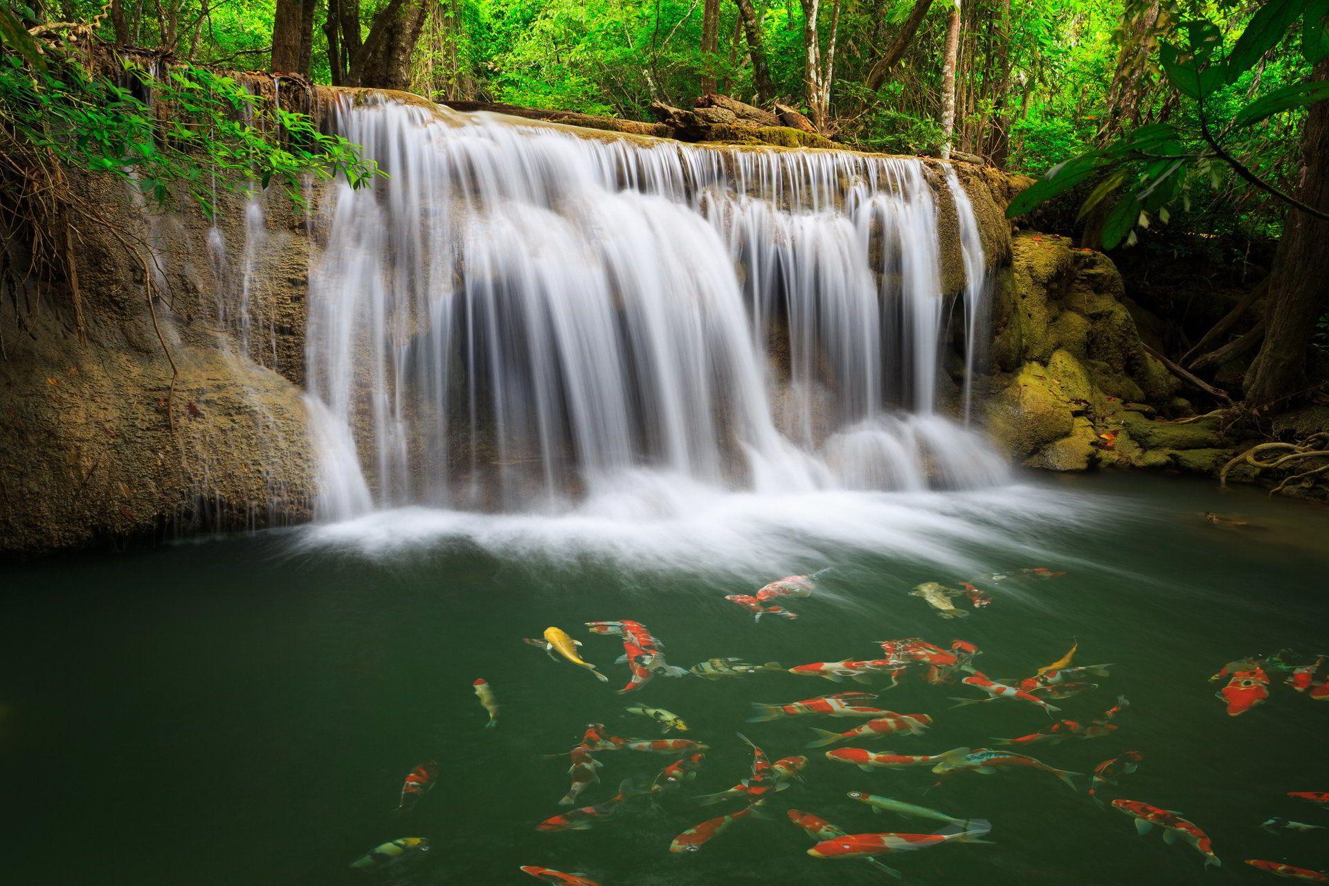 Hình ảnh thác nước và đàn cá đẹp