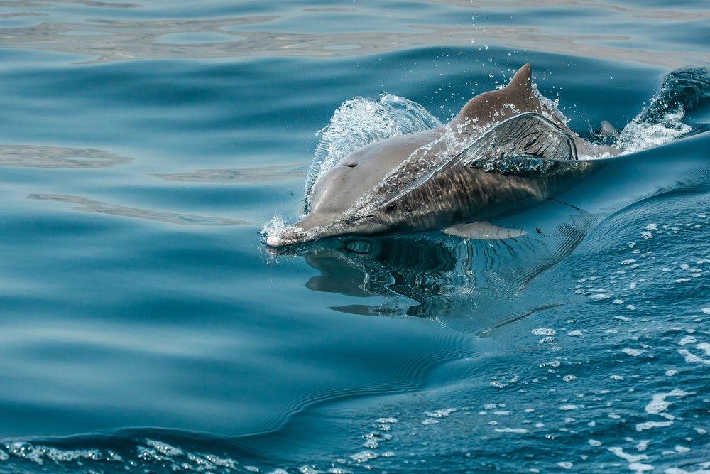 Hình ảnh tuyệt đẹp về cá heo