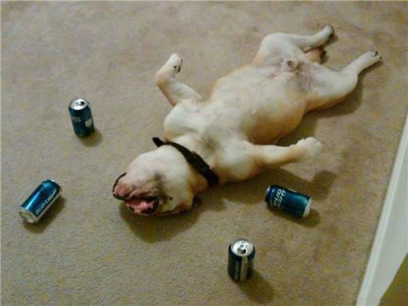 Hình ảnh khó đỡ về động vật say rượu